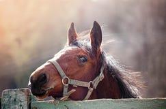 Pferd im Sonnenschein Lizenzfreies Stockbild