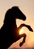 Pferd im Sonnenuntergang Stockbild
