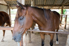 Pferd im stabilen Bauernhof Lizenzfreie Stockfotografie
