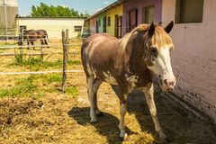 Pferd im Stall stockfotos