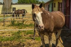 Pferd im Stall stockbild