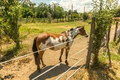 Pferd im Stall stockfoto