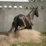 Pferd im Staub Stockbild