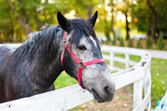 Pferd im Stift Stockfotografie