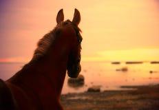 Pferd im suinset auf dem Meer Lizenzfreies Stockbild