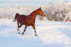 Pferd im Winter Stockbild