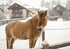Pferd im Winter Stockfotografie