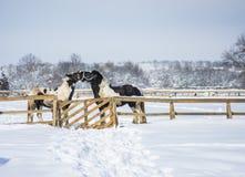Pferd im Winter lizenzfreies stockfoto