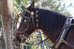 Pferd im Zaum Stockfoto