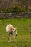 Pferd innerhalb des Zauns Lizenzfreie Stockfotos