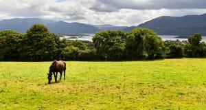 Pferd isst auf Wiese Lizenzfreies Stockbild