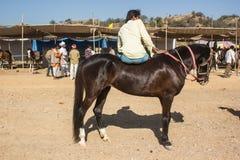 Pferd Jocky Stockbild