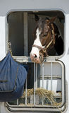Pferd kann nicht an das Heu gelangen Stockfotos