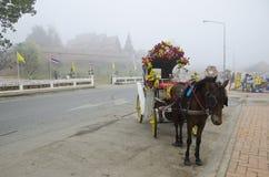 Pferd in Lampang lizenzfreie stockfotografie