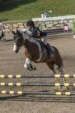 Pferd mit dem Reiter, der einen Sprung macht Lizenzfreie Stockfotografie