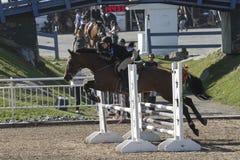 Pferd mit dem Reiter, der einen Sprung während des Wettbewerbs macht Lizenzfreie Stockfotografie