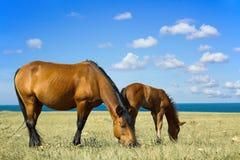 Pferd mit einem Fohlen lizenzfreies stockfoto