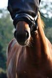 Pferd mit einem schwarzen Netz Stockbild
