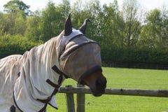Pferd mit Fliegengitterhaube Lizenzfreies Stockbild
