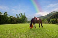 Pferd mit Gras, Berg und Himmel mit Regenbogen in Ang Khang National Park Chiangmai Thailand Lizenzfreies Stockbild
