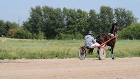 Pferd mit Jockey im Warenkorb auf Rennstrecke stock video