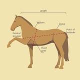 Pferd mit Maßaufklebern Lizenzfreies Stockbild