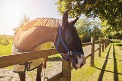 Pferd mit Maske Stockbilder