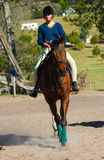Pferd mit Mitfahrer Stockfotos