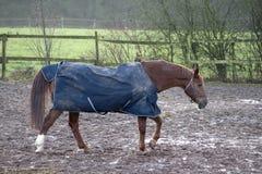Pferd mit Regendecke Stockfotografie