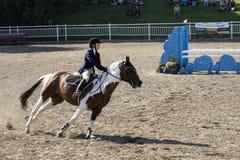 Pferd mit Reiter Lizenzfreie Stockfotos