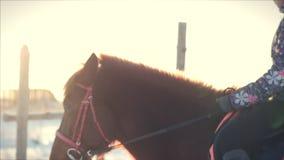 Pferd mit Reiter im Winter, Nahaufnahme Langsame Bewegung stock video footage