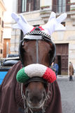 Pferd mit Renhörnern stockfotos