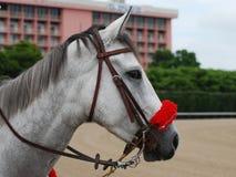 Pferd mit rotem Zaum stockbilder