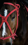 Pferd mit roter Farbe Stockfotografie