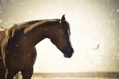 Pferd mit Schmetterling Stockfoto