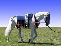 Pferd mit Vaulting-Sattel Lizenzfreie Stockfotos