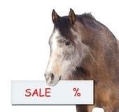 Pferd mit Verkaufsprozentzeichen auf weißem Hintergrund Stockfotografie