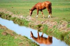 Pferd nahe einem Abzugsgraben Stockfoto