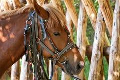 Pferd nahe Zaun Stockfotografie