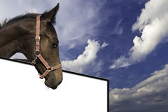 Pferd oberhalb einer Tafel Stock Photos