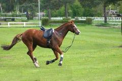 Pferd ohne Mitfahrer Stockfotos