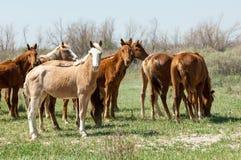 Pferd, pferdeartig, Nag, hoss, Kerbe, Dobbin lizenzfreie stockfotografie