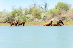Pferd, pferdeartig, Nag, hoss, Kerbe, Dobbin stockfoto