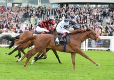 Pferd Racing Stockfoto