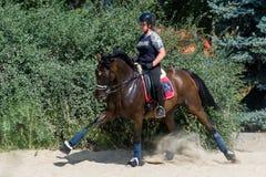 Pferd Racing Lizenzfreies Stockbild