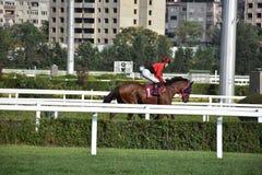 Pferd Racing stockbild