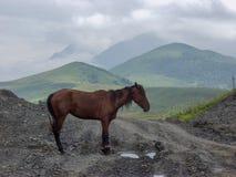 Pferd Reise zum Kaukasus in Kabardino-Balkarien stockfoto
