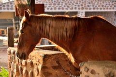 Pferd rief George an Lizenzfreie Stockfotografie