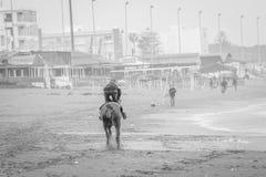 Pferd in Saaidia-Strand lizenzfreies stockbild