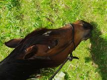 Pferd in Smokey Mountains, Del Rio, Tennessee Lizenzfreies Stockbild